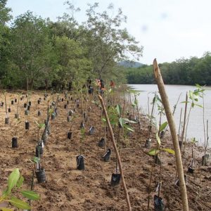 The Tree Planting Sites by Malaysia Nature Society (MNS)_1