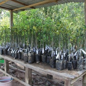 The Tree Planting Sites by Malaysia Nature Society (MNS)_4